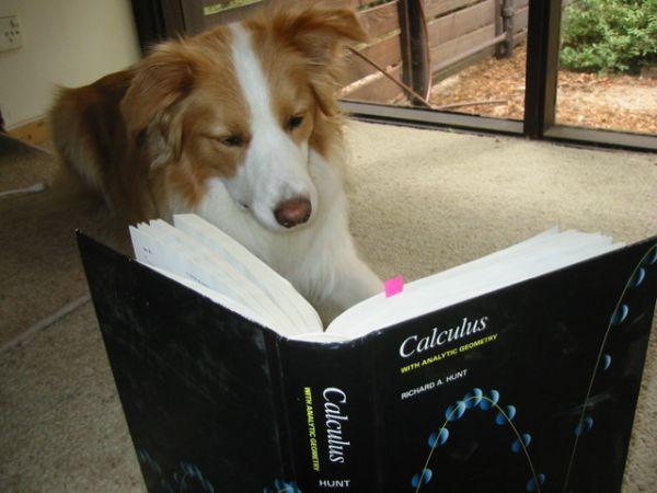 Dog Makes Too Many Assumptions