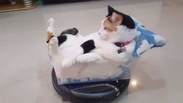 Cat Rides On A Roomba Like A Boss