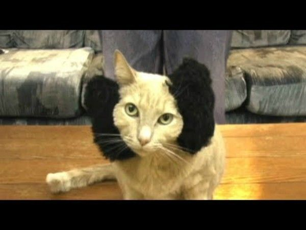 star--episode-iv-a-new-hope-reenacted-by-cats