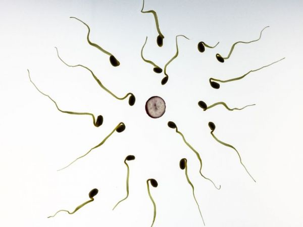 Check Your Sperm Count