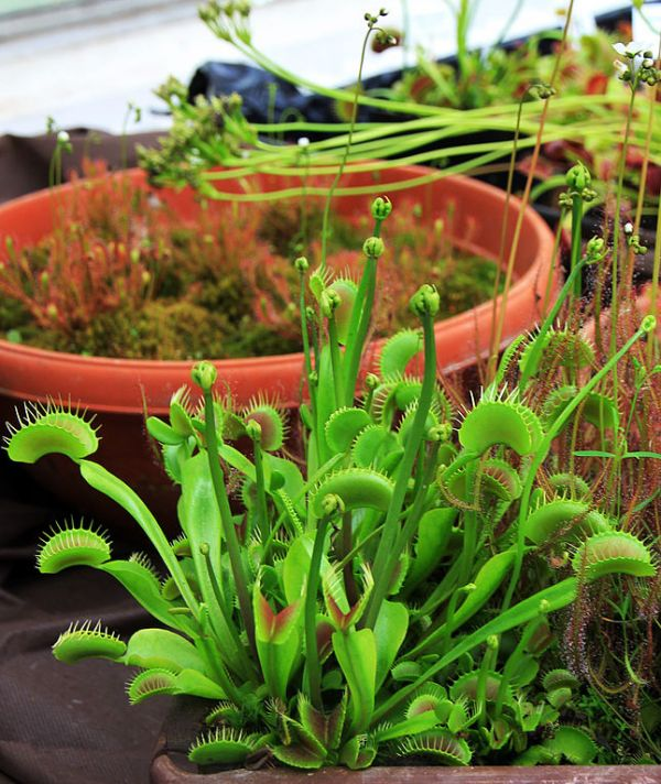 Predatory Plants Neatorama