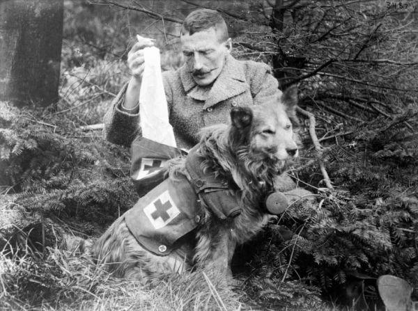 The Animals of World War I