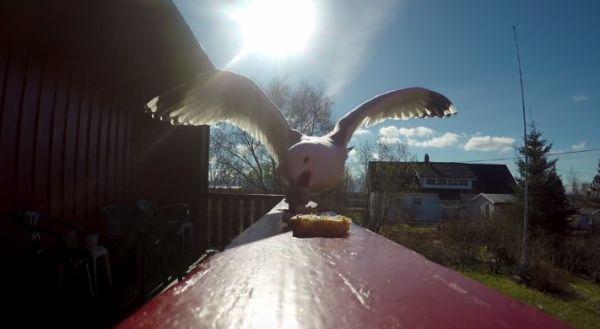 Thieving Seabird Films Award-Winning Short