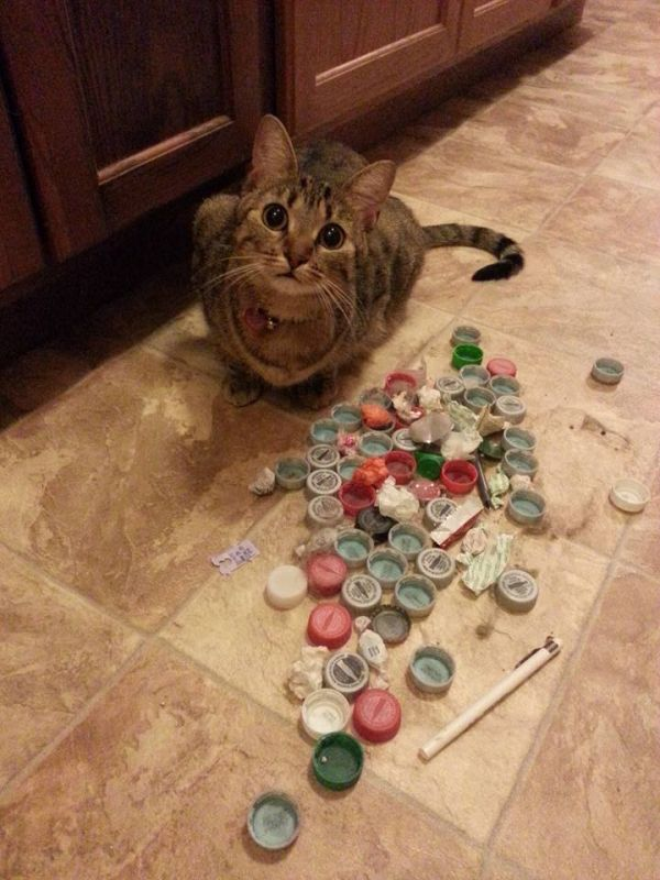 cats who collect things neatorama