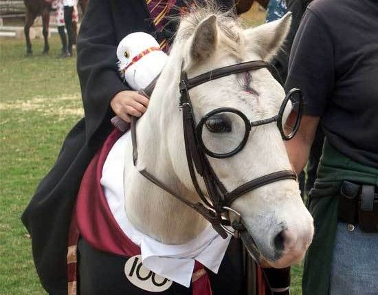 Horse Cosplay Harry Potter Edition Neatorama