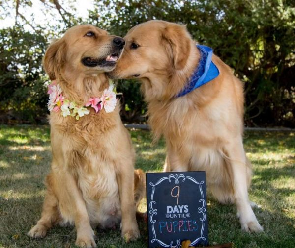 This Pooch's Maternity Photos Are the Best