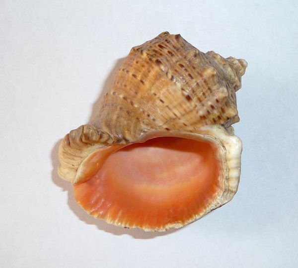 How do mollusks breathe?