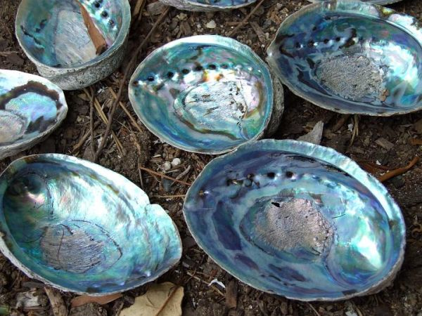 All About Seashells - Neatorama