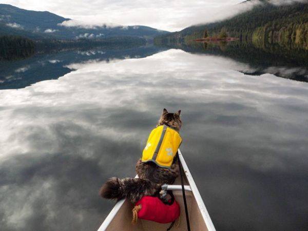 Instagram Account Shows What It's Like To Go Camping With Your Cat