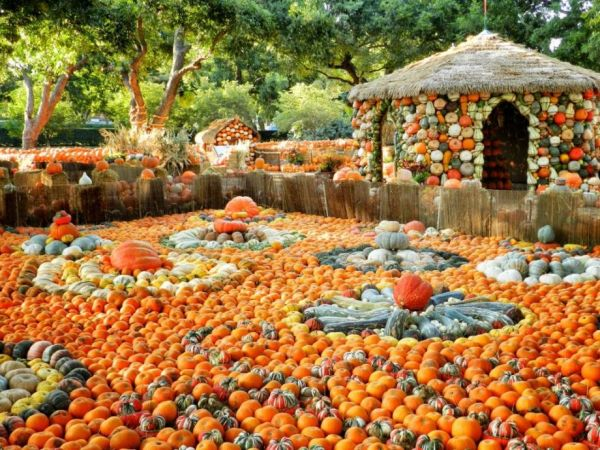 Pumpkin Land