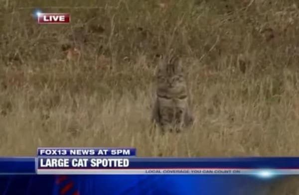 Large Cat Spotted