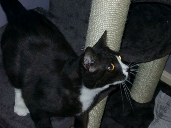 Missing Cat Emerges in Paris Eight Years Later