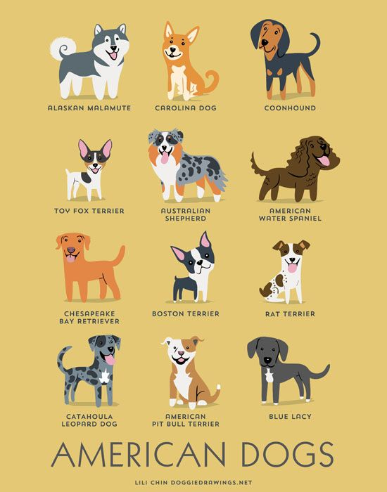 Pets - Magazine cover