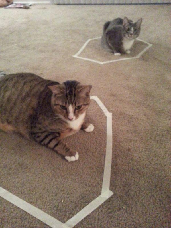 How to Trap a Cat & How to Trap a Cat - Neatorama Aboutintivar.Com