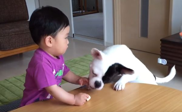 Dog Cries with Baby