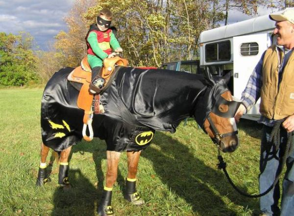 24 animals that arent dogs in costumes neatorama costumes theres pretty much one name in the industry the horse tailor in fact if you enjoy seeing horses in costumes youre doing yourself a solutioingenieria Gallery