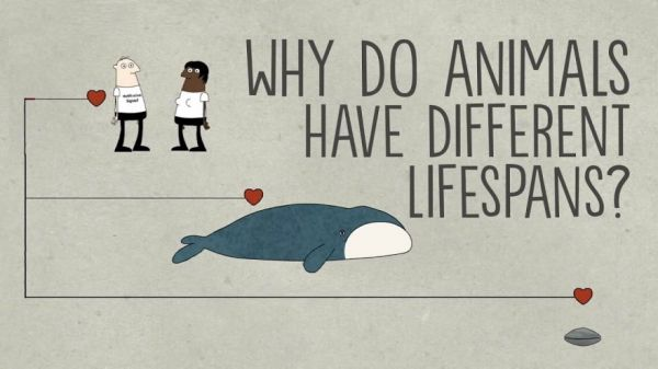 Why Do Animals Have Such Different Lifespans?