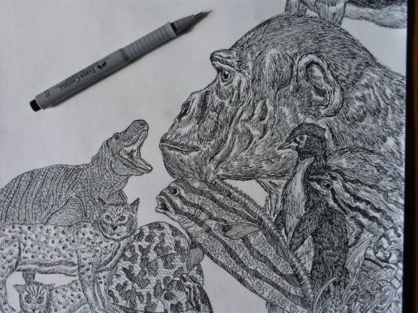 11 Year Old Boy Creates Amazingly Detailed Nature Drawings