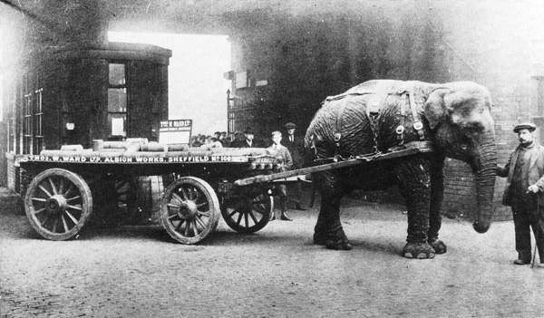 Scrap Metal Pick Up >> During World War I, Circus Animals Joined the War Effort ...