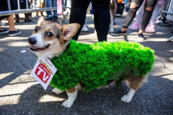 All The Good Dogs At The 2017 Tompkins Square Halloween Parade