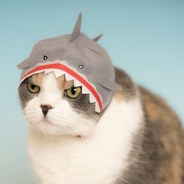Your Cat Needs a Cool Aquarium Animal Hat For Halloween and Beyond ...