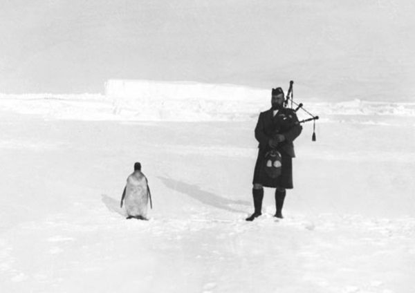 20 Black-and-White Facts About Penguins