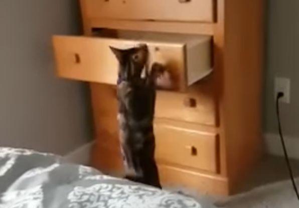 Loki's Hiding Place