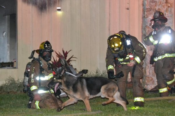 Heroic Dog Rescues 2 Children from House Fire