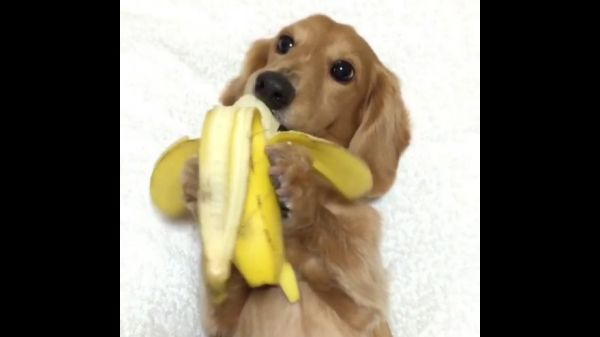Dog Eats Banana- The Shocking Video Footage