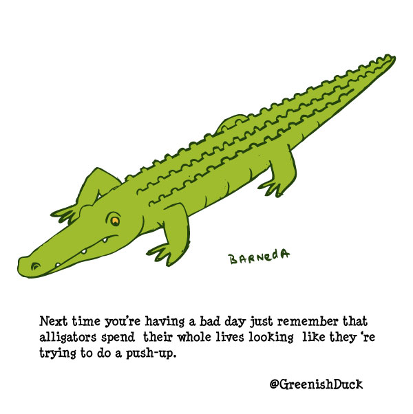 alligator cartoon