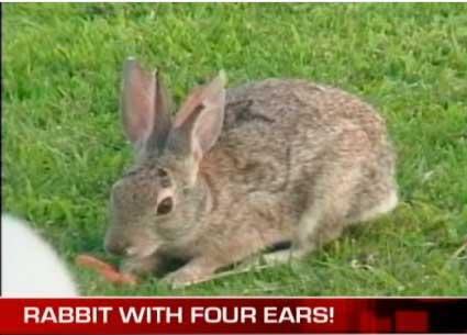 4 Ears