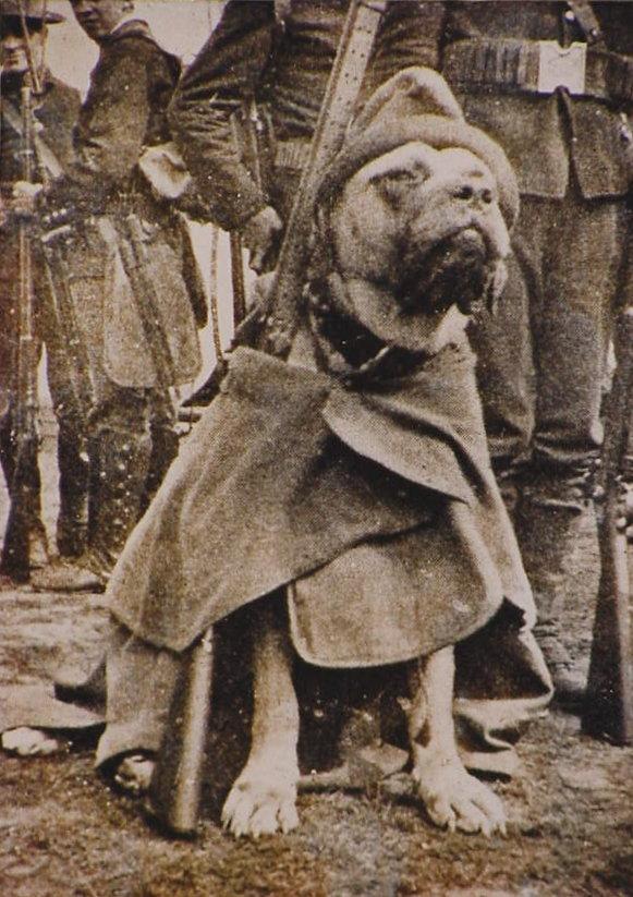 Civil War Dogs