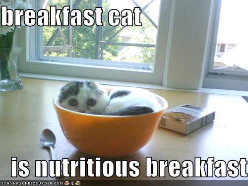 breakfastcat