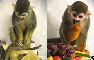 squirrel-monkey-324x205
