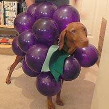 doggygrapes