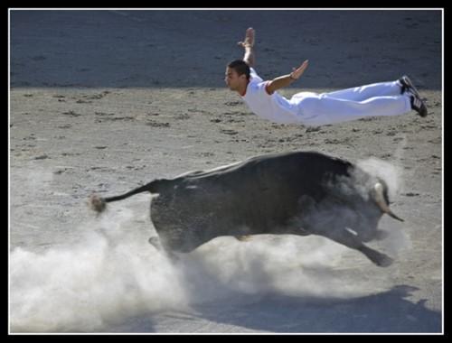 Bull-leapers6