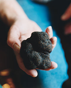 black truffle