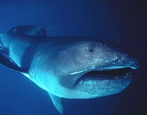 best ever creepy shark
