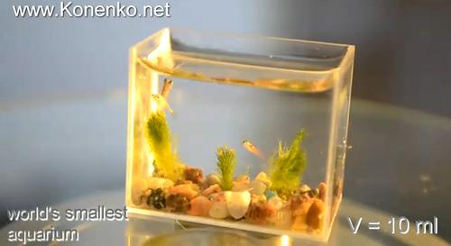 The World's Smallest Aquarium - Neatorama