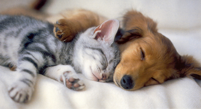 little kitten and a sleepy puppy