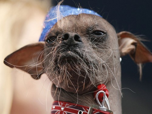 meet mugly ugliest dog
