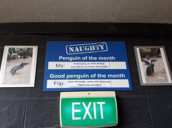 Penguins of the Month