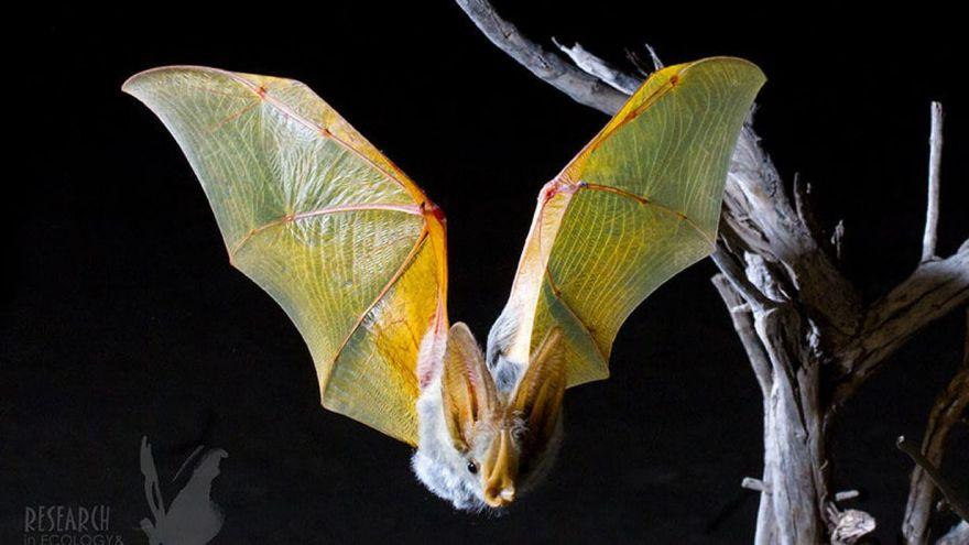 Where Do Desert Bats Go at Night?