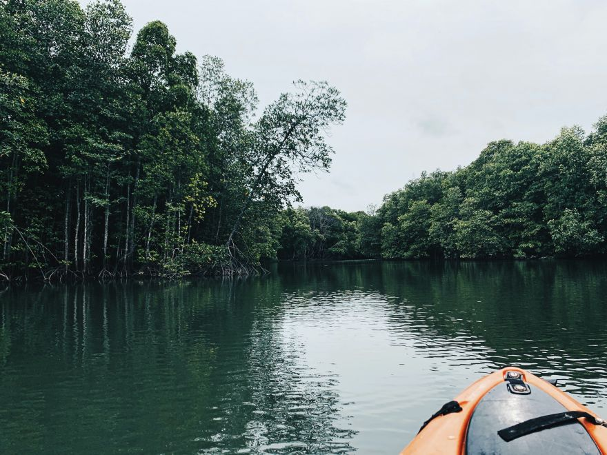 This Yucatan Forest Was Trapped In Time