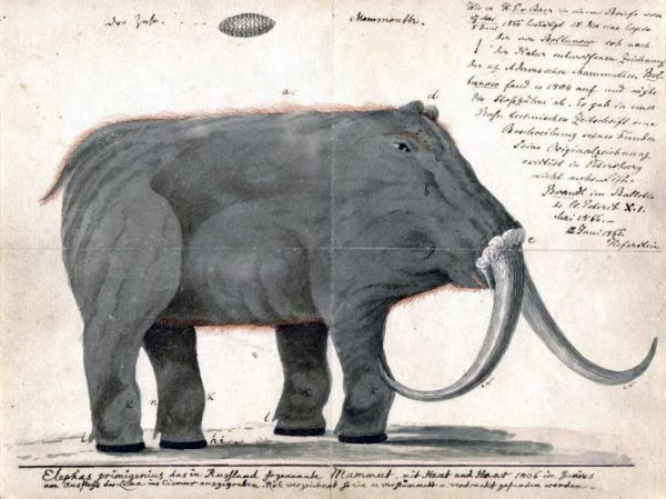 This Terrible Mammoth Drawing Was a Giant Help to 19th-Century Naturalists