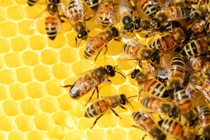 Bees That Make Near-Perfect Clones of Themselves