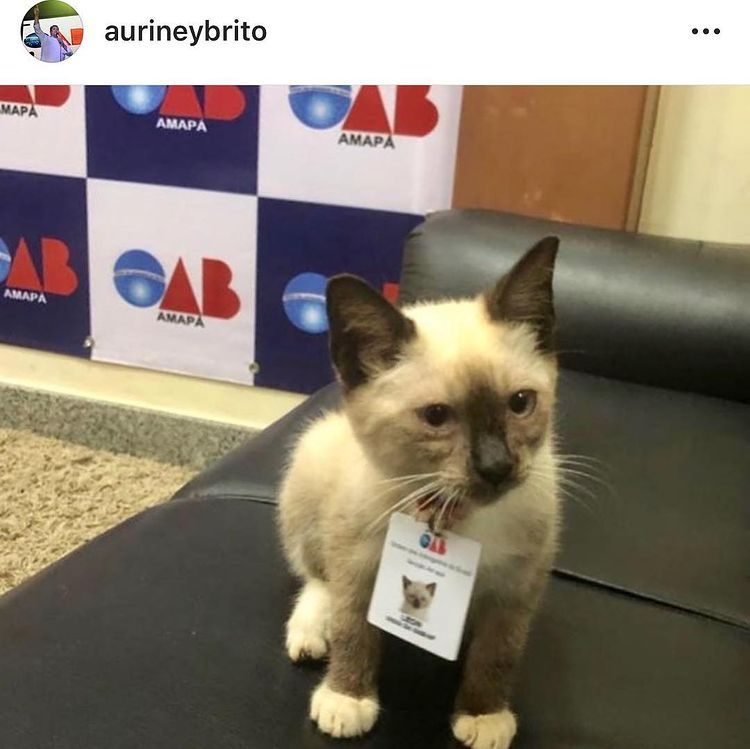 Stray Kitten Gets Hired As A Security Guard