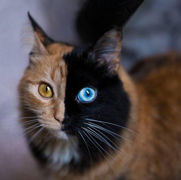 How Do You Make Cats More Cuddly