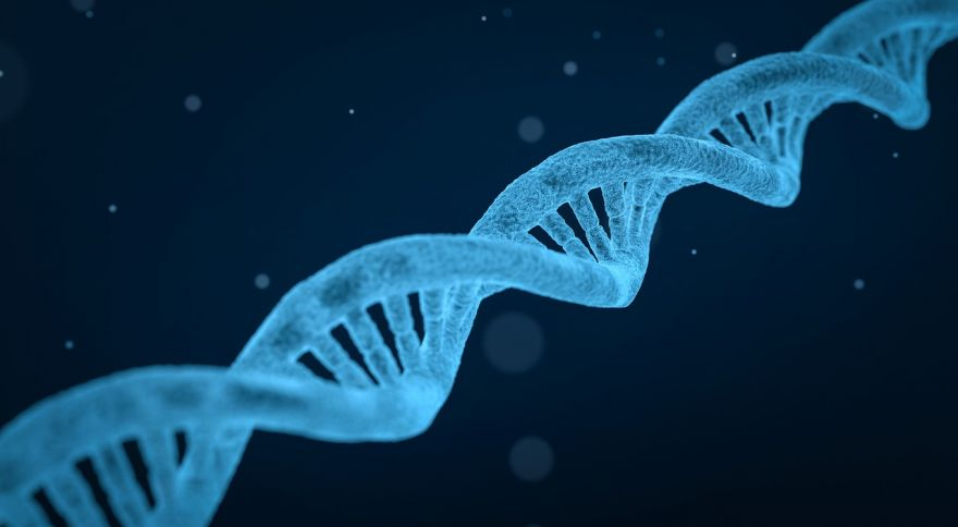 "Why We Need ""Junk DNA"""