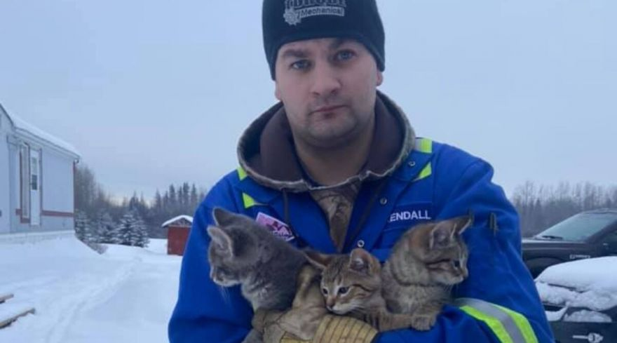 Canadian Oil Worker Rescues Kittens with Coffee